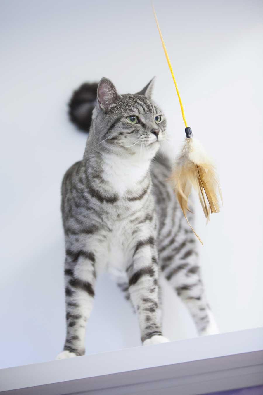 cattery wimbledon