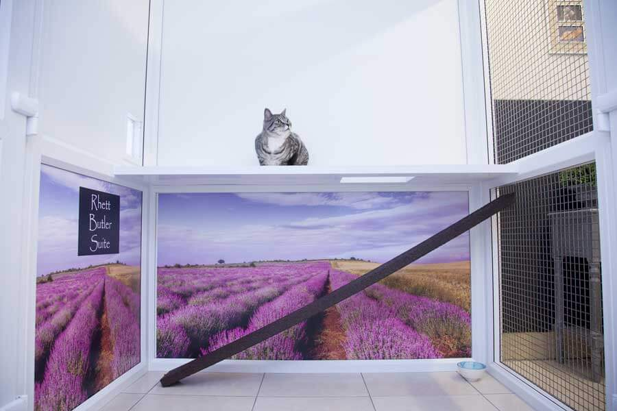 luxury cattery london