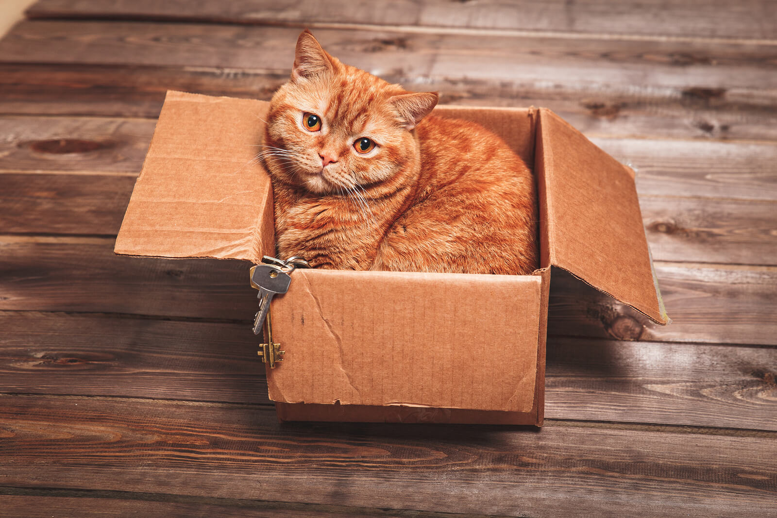 Top Tips For Moving Home With Your Cat