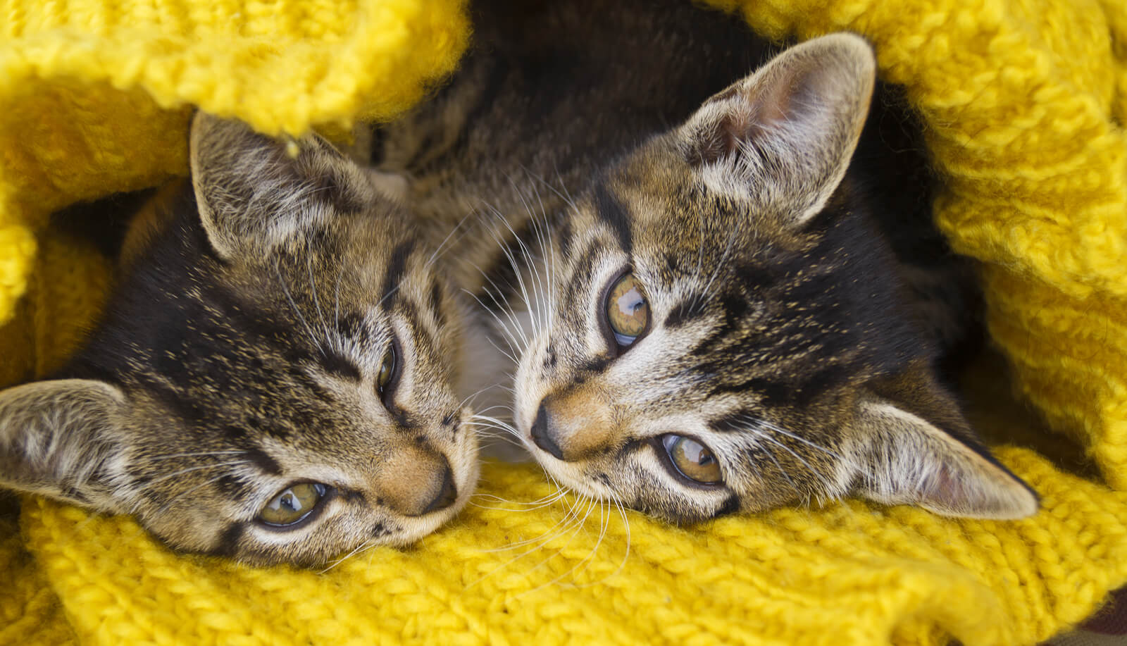 5 Winter Cat Care Tips