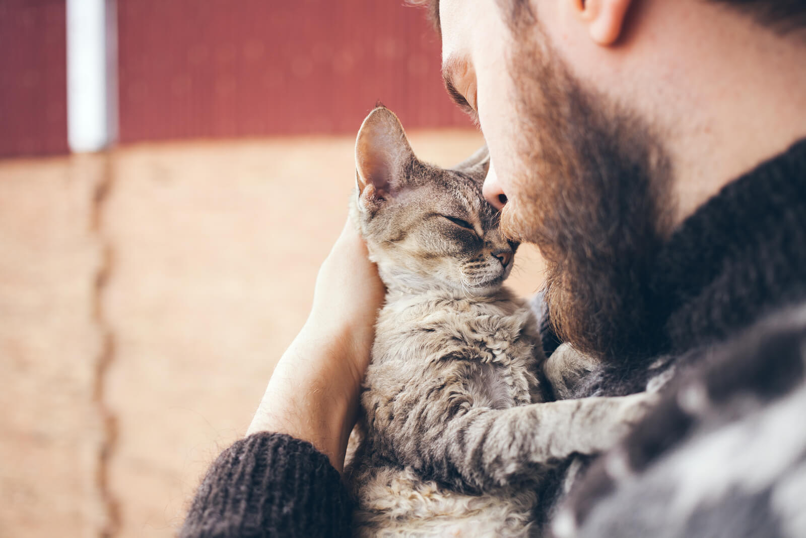 How To Build Your Cat's Trust (And Affection!)