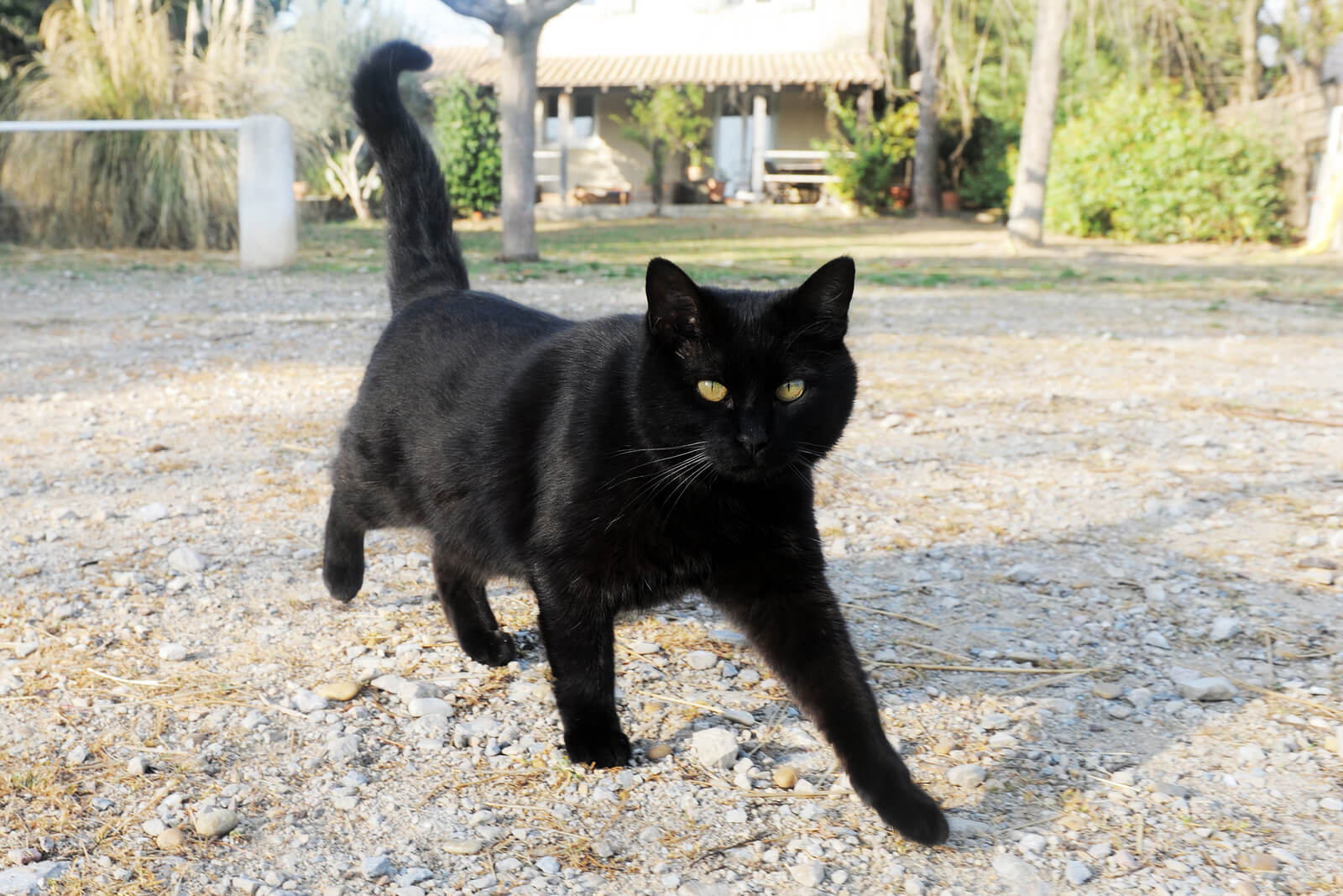 October Is Black Cat Awareness Month!