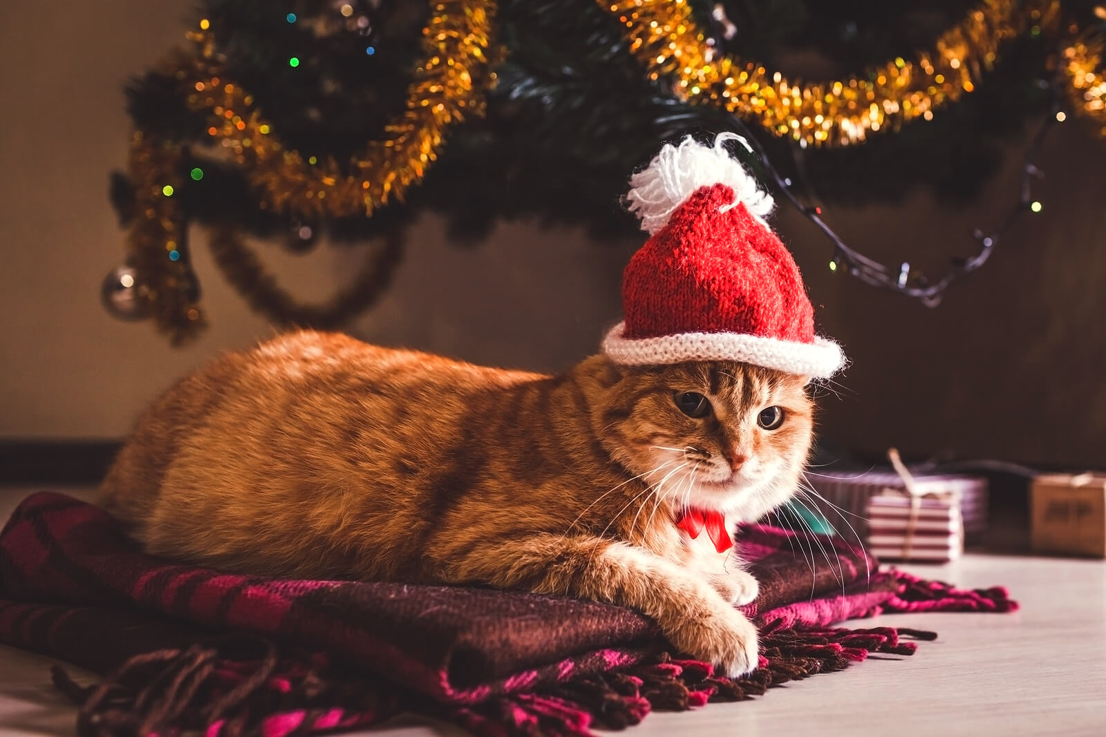 What To Get Your Cat For Christmas