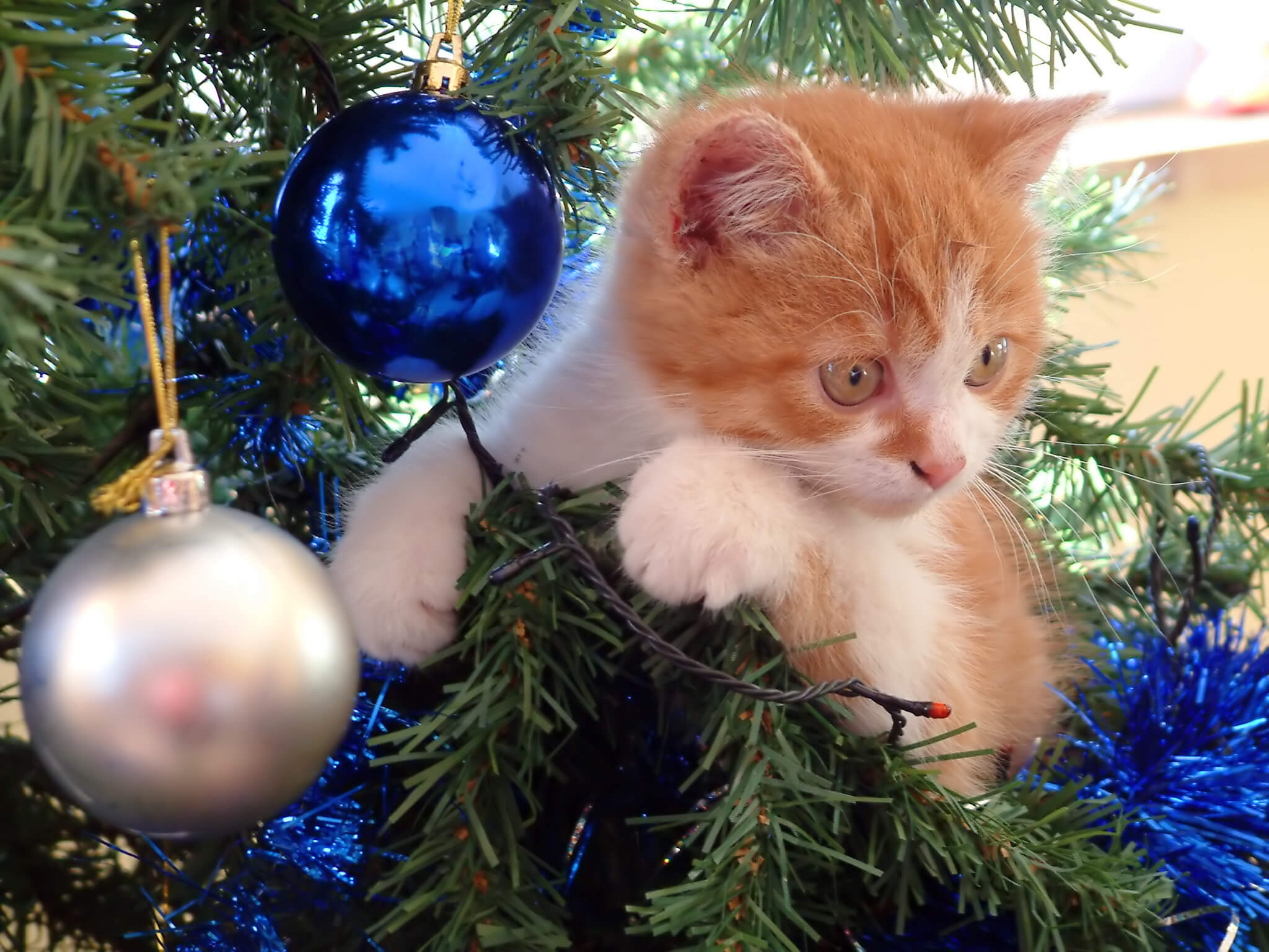 How To Make Your Christmas Tree Safe For Your Cat